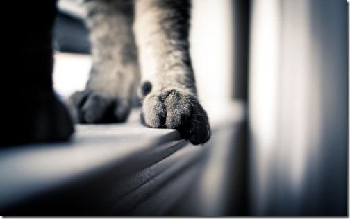 fotos de gatos (33)