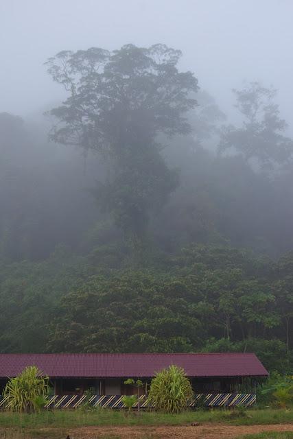 Brume matinale. Carbets de Coralie (Crique Yaoni), 1er novembre 2012. Photo : J.-M. Gayman