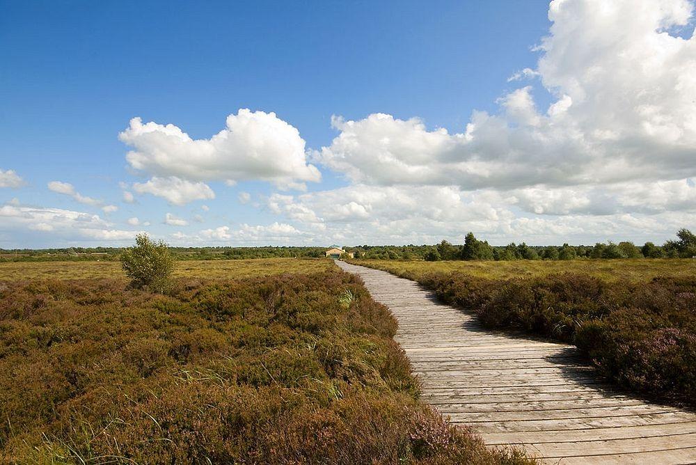 corlea-trackway-1