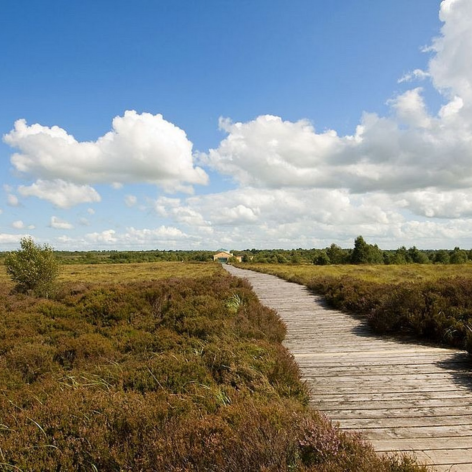 Corlea Trackway: A 2,000-Year-Old Wooden Road in Ireland