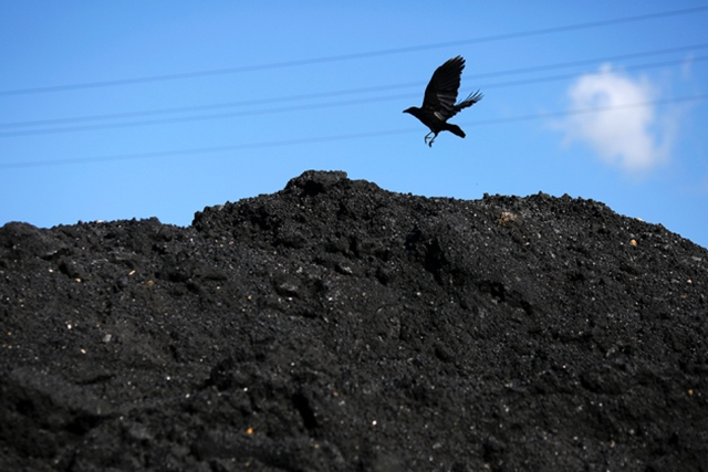A crow flies over a pile of coal. Trump wants to boost the U.S. coal industry, after announcing his decision to withdraw the U.S. from the Paris climate agreement. Photo: Luke Sharrett / Bloomberg / Getty