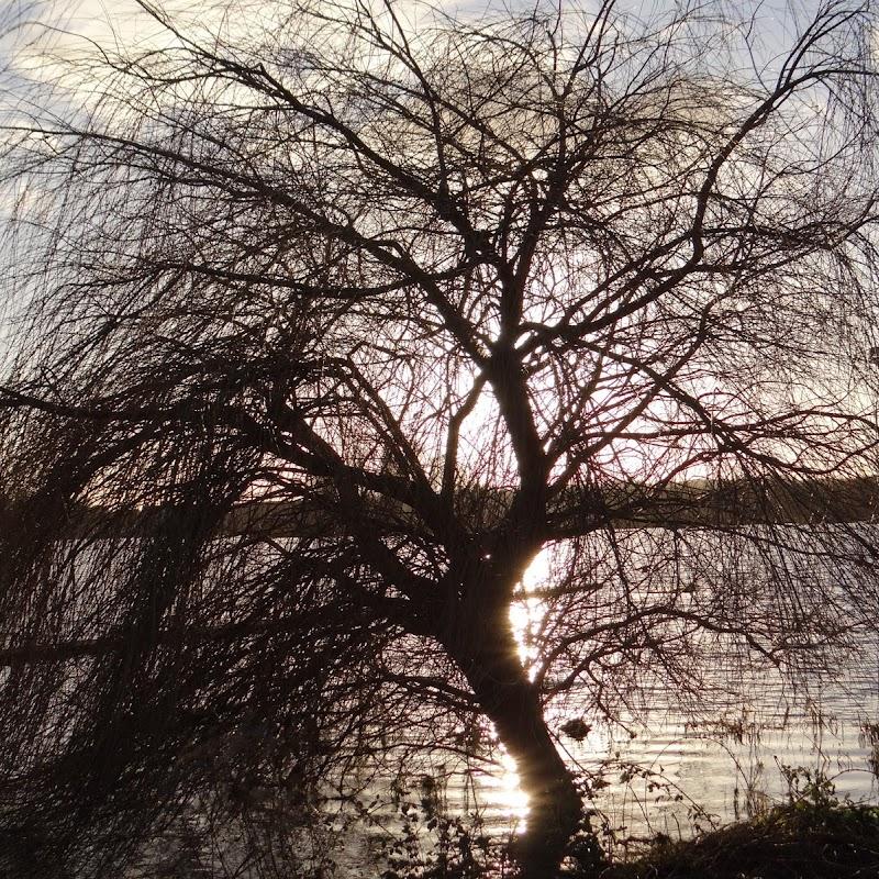 Willen_Lake_31.JPG