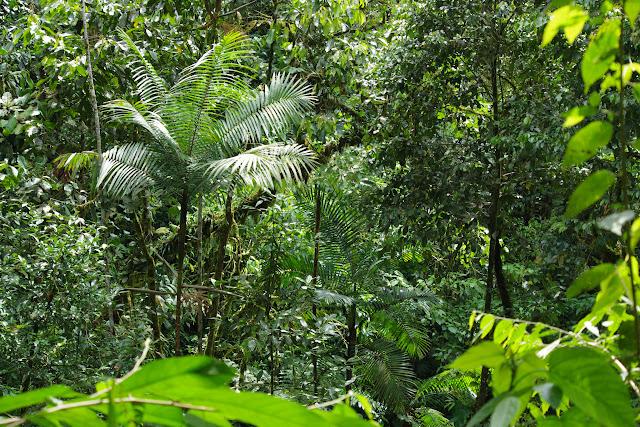 La forêt en amont de Las Juntas, 1500 m (Carchi, Équateur), 26 novembre 2013. Photo : J.-M. Gayman