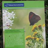 Растения медоносы для привлечения полезных насекомых