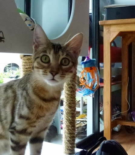 5 Reasons to Visit a Cat Cafe (and 5 Reasons Not To)