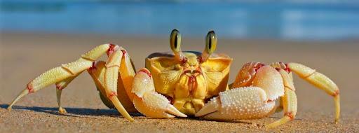 CrabForum