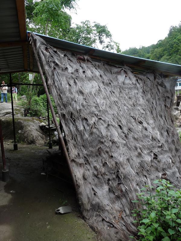 Chine .Yunnan,Menglian ,Tenchong, He shun, Chongning B - Picture%2B907.jpg