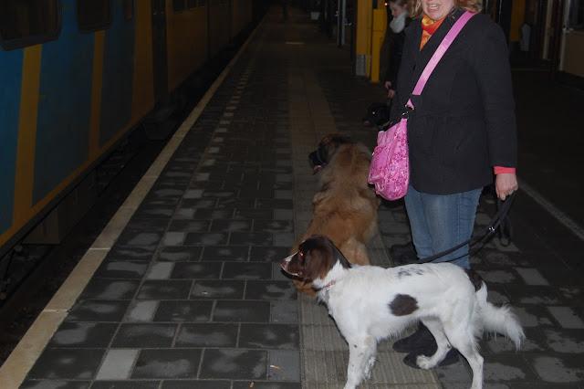 Jonge Hond centrum Emmen - 2012-04-01%2B054.JPG