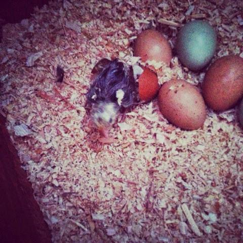 Hatching!