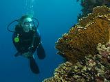 Isabell diving along the reef (© 2012 Bernd Neeser)