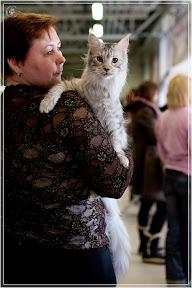 cats-show-24-03-2012-fife-spb-www.coonplanet.ru-049.jpg