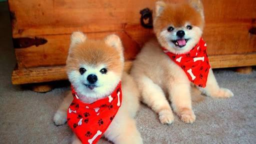 Male and female dog name