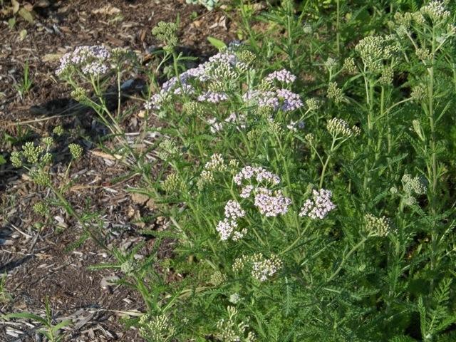 Melissa Jones Schoolyard Habitat Garden - Image%2B1.jpg