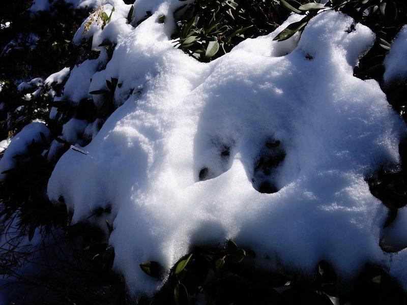 2014_0222 合歡小奇萊賞雪_222