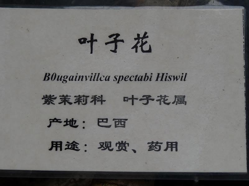 CHINE.YUNNAN.KUN MING Temple, jardin horticole,Musée des minorites - P1270312.JPG