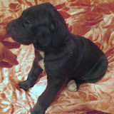 Available black girl #4 @ 4 weeks
