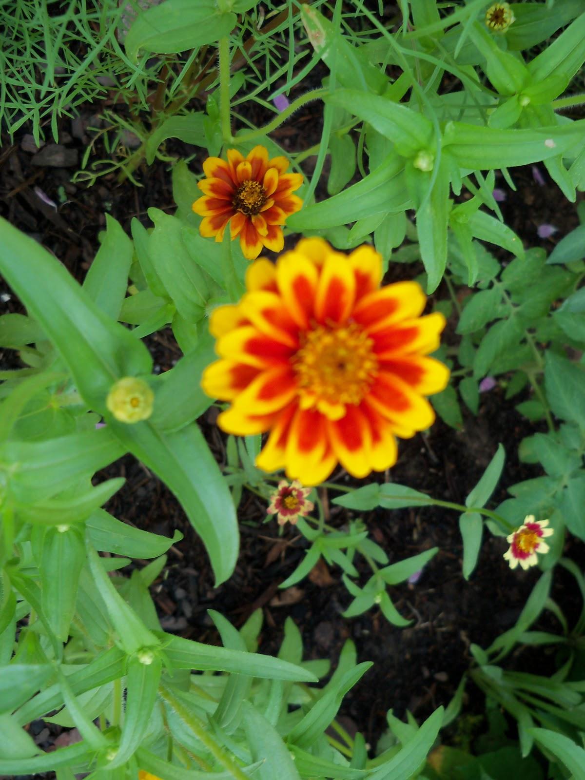 Gardening 2010, Part Two - 101_3357.JPG