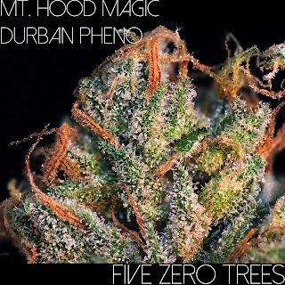 Mt. hood magic durban macro 1