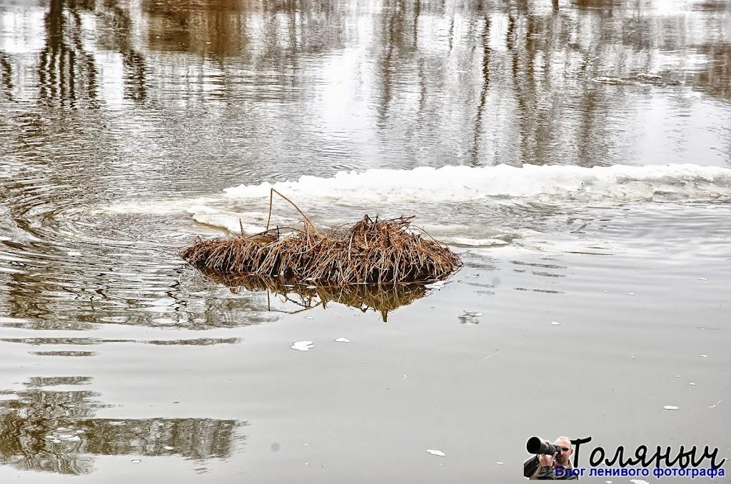 Большая льдина с травой, которую, видимо, оторвало от берега. Чекалин