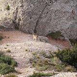 Montserrat 2006 - CIMG8063.JPG