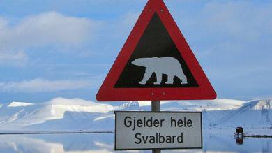 Svalbard, uomo ucciso da orso polare in un campeggio