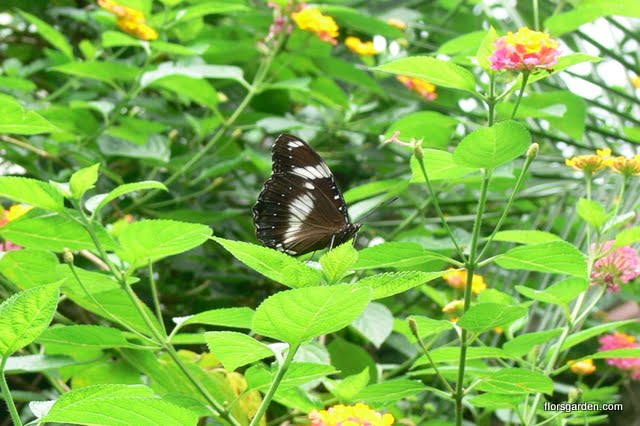 Birds & Butterflies - P1300592.JPG