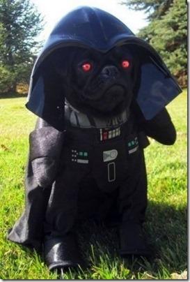 disfraces divertidos para perros  (4)