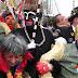 2011-03-26-leffrinckoucke088.JPG