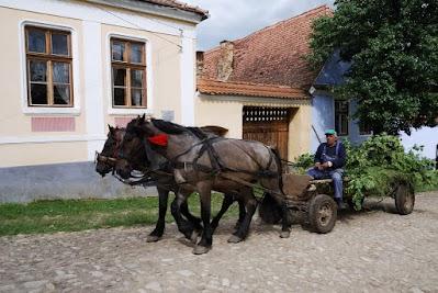 Pferdefuhrwerke in Viscri