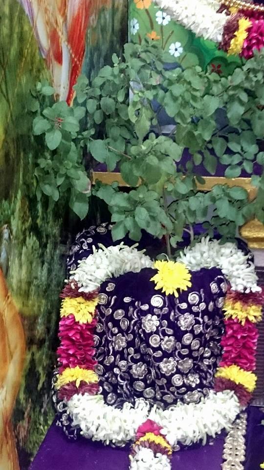 ISKCON Bhusawal Deity Darshan 22 Jan 2016 (7)