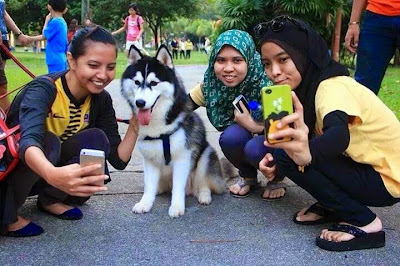 "Penganjur ""I Want To Touch A Dog"" mohon maaf"