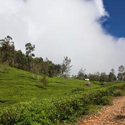 Srilanka_078
