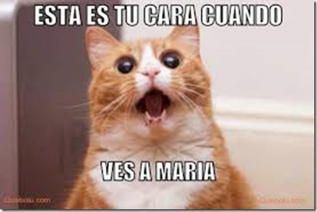 humor gatos (9)