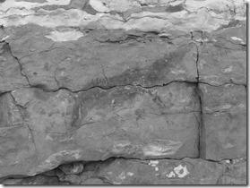 peinture rupestre rive gauche Léna 2