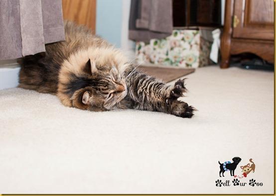 Matilda October 26th (© Bell Fur Zoo)