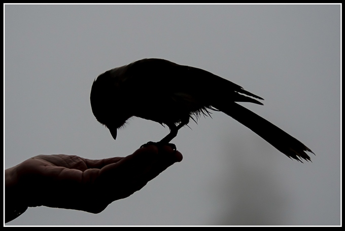 """Bird in Hand"" by Valerie Henschel"