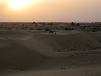 Sunset - Camel Safari