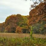 Arboretum Colors #2.JPG