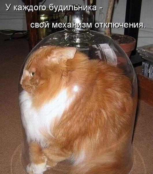 1313736322_kotomatritsa-1