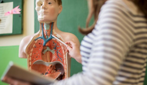11 Tips For Studying Anatomy