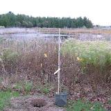 Hammo Planting - Shannon Schiesser - IMG_4894.JPG