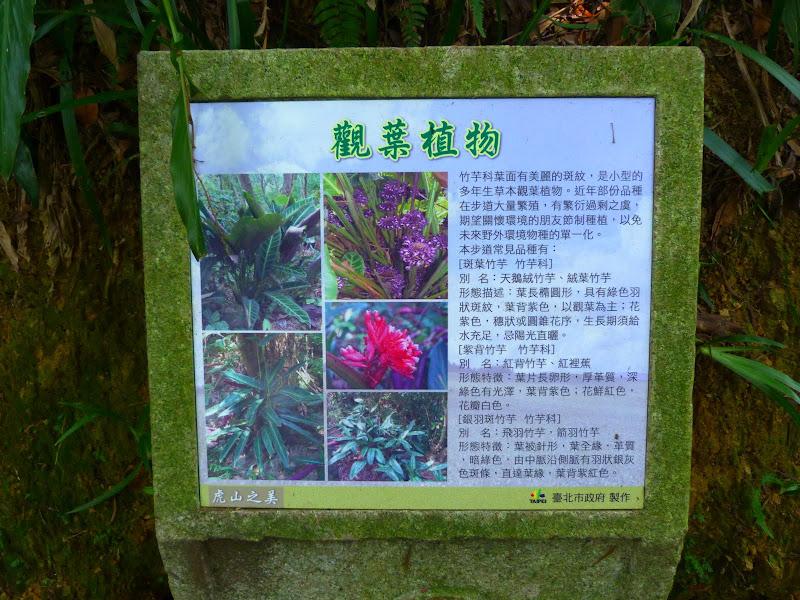 Taipei. Si Shou Shan, et la découverte des maisonnettes du professeur Y I   易教授 - P1340631.JPG