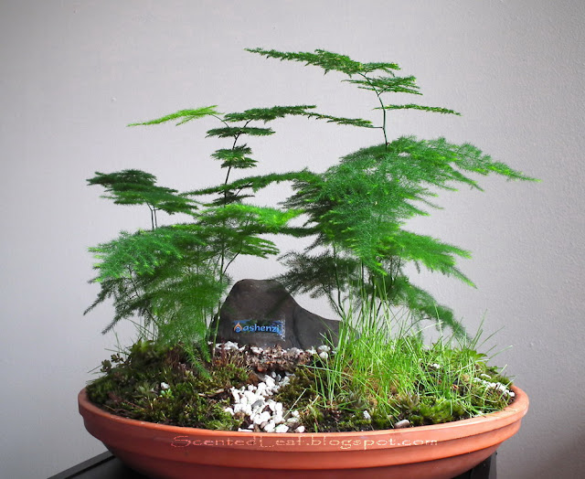 Saikei with Asparagus Ferns rearranged for Vancouver's Outdoor Adventure and Travel Show