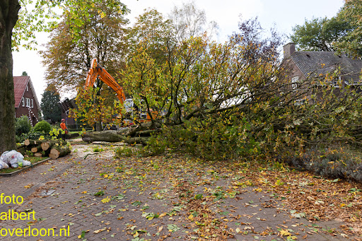 Bomen gekapt Museumlaan in overloon 20-10-2014 (30).jpg