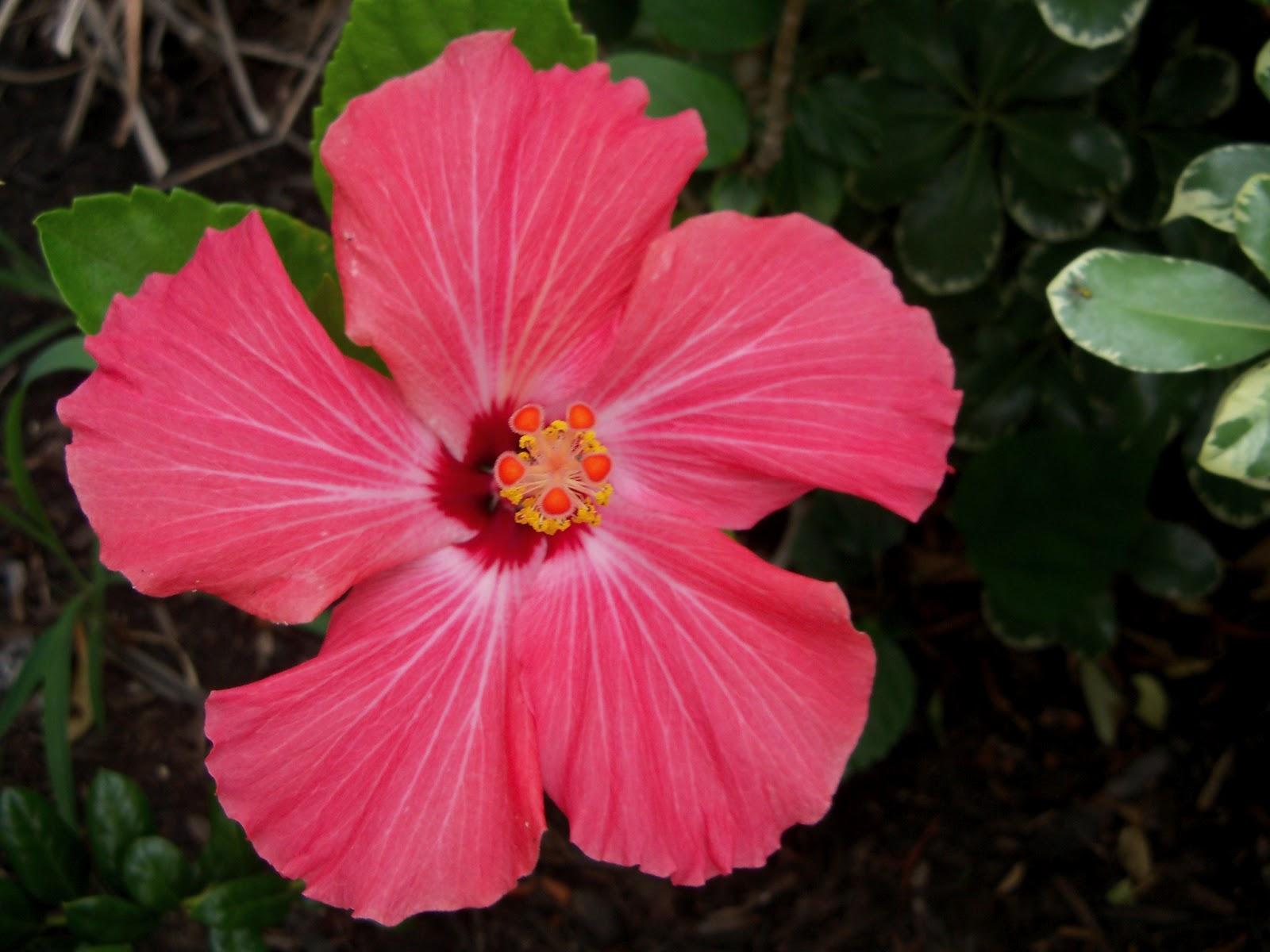 Gardening 2011 - 100_7249.JPG