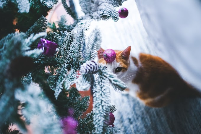 Cats vs Christmas trees - TIPS to keep it standing