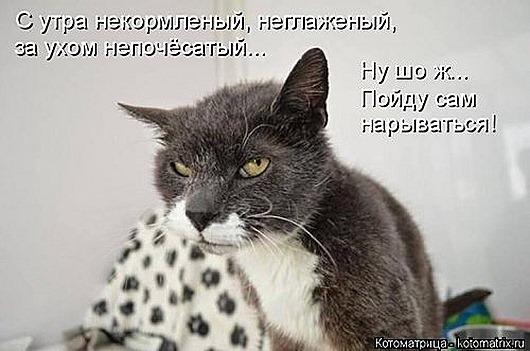 1411716376_kotomatricy-8