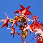 2014_10_26_Fall_Colors