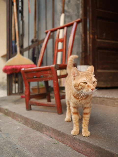 cat standing in front of a chair in Changsha, Hunan, China