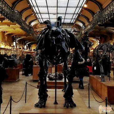Museos Paris Historia Natural 9